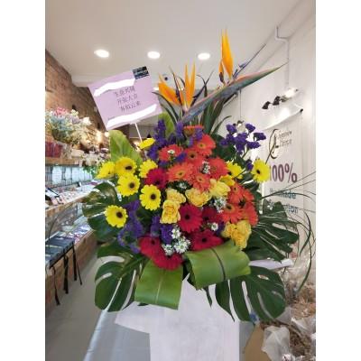 Opening flower arrangement-Paradise Bird-Single layer