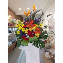 Opening flower arrangement-Paradise Bird-Single layer